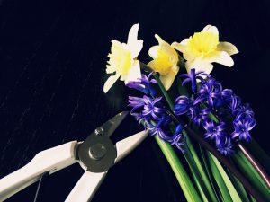 水仙、ヒアシンスと白い花ばさみ