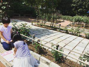 公園で将棋をする小学生女子
